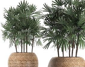 Decorative palm tree in a pot 416 3D