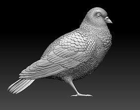 3D print model dove Pigeon