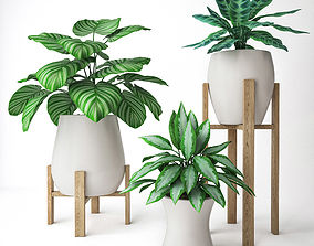 Plant Set 2 3D model