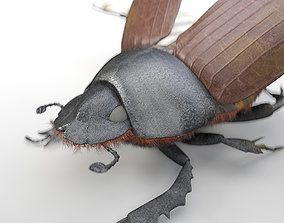 Dung Beetle 3D model rigged