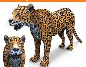 3D Leopard low poly model VR / AR ready