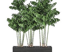 Decorative palm Chamaedorea in flowerpots 797 3D model