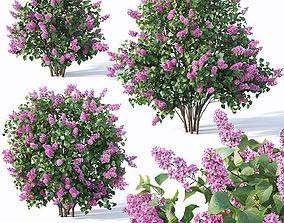 3D Lilac Syringa vulgaris Nr5 - Three sizes