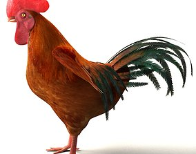 cartoon Chicken Rigged 3D model rigged