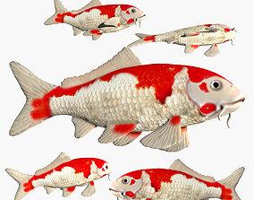 3D model Koi Carp fish