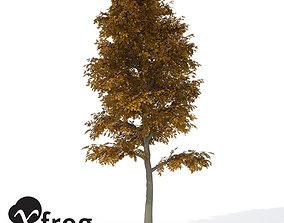 3D XfrogPlants Autumn European Beech greenworks