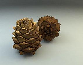flora Pinecone 3D model