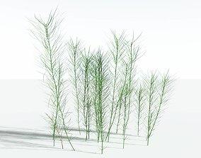 EVERYPlant Common Horsetail SINGLE --1 Model--