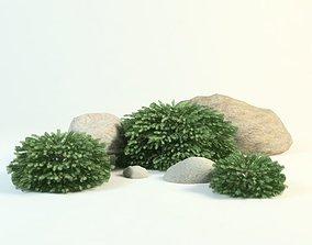 European spruce picea abies nidiformis 3D model