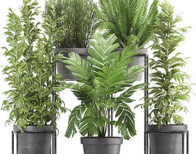 3D model Collection of Exotic Plants support