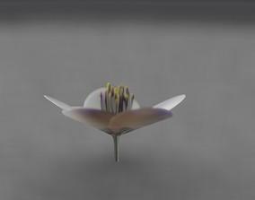 3D asset White Flower Blossom Version 1 - Object 11