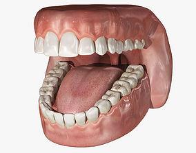 Rigged Mouth 3D Models | CGTrader