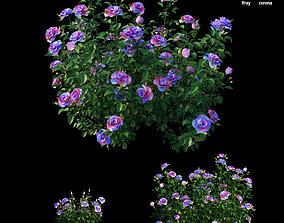 3D Plant rose set 16