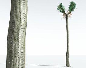 EVERYPlant Ovate Sigillaria 03 --18 Models-- 3D