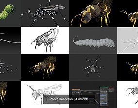 Insect Collection 3D model