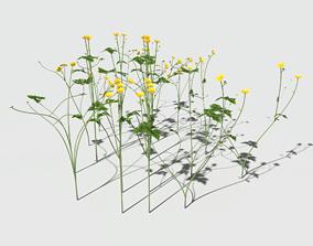 3D model Creeping Buttercup Flower Pack