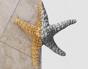 3D asset Dry decorative photoscanned Starfish