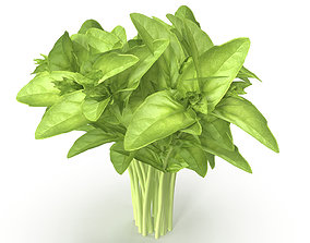 Cinnamon basil Bunch 3D