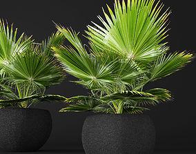 palm tree 3D model bark