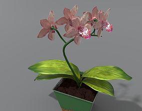 orchid in a rusty pot 3D