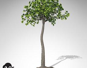 XfrogPlants Glossopteris 3D model