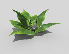 Low poly Plant 3D model VR / AR ready park