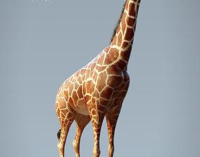 Giraffe 3D rigged nature