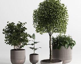 Indoor plant 12 3D model