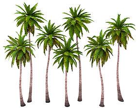 Palms low poly set 1 3D model