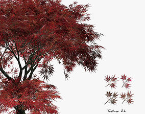 Maple Japanese Red 02 3D