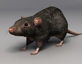 Lowpoly Rat 3D model