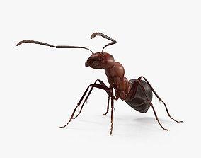 Ant HD 3D model