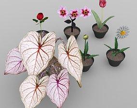 Plants Set 2 3D model