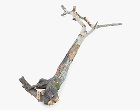 3D asset Withered Broken Tree with Roots