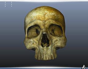 3D asset Old Skull