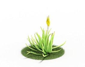 3D Flowering Alovera Plant