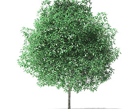 Green Ash Tree 3D Model 3m