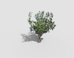 3D asset low poly tree