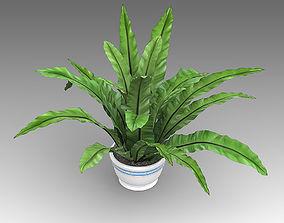 3D model Asplenium Plant 03