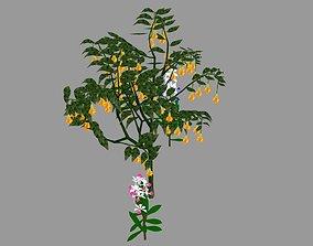 3D asset tree flower
