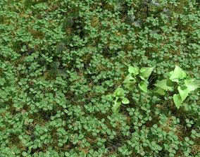 Clover Meadow Patch clover 3D model
