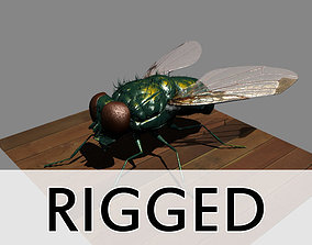 Fly Rigged 3D