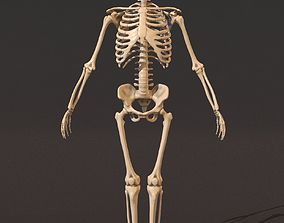 Human male skeleton skeletal 3D model