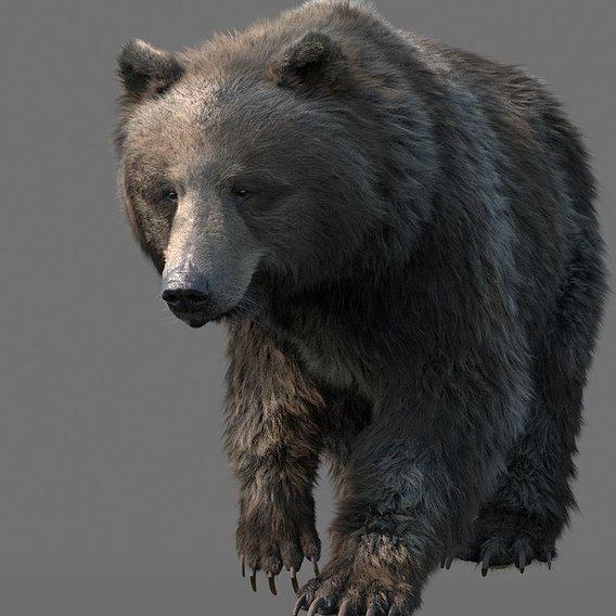 cg bear