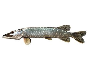 Pike Fish Esox Lucius animals 3D model