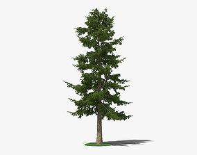 Cedar Tree 3D model