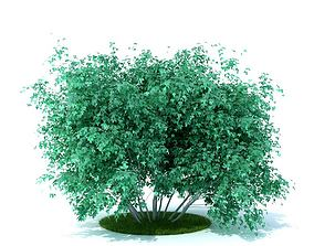 3D Leafed Green Plant