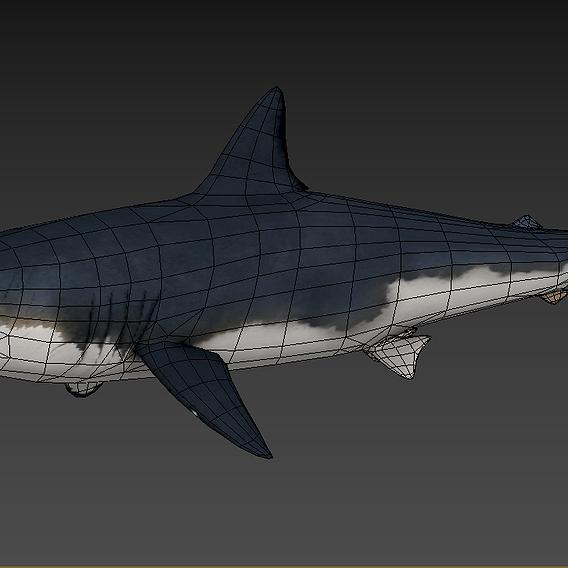 3D LOWPOLY Animate Shark