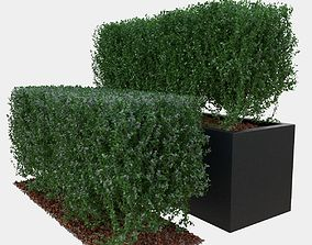 3D PBR Buxus the long bush in the shape of cube