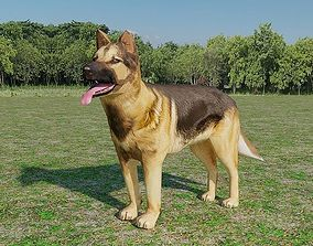 German Shepherd Low Poly 3D model
